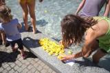 Setki kaczuszek w fontannie. Co się działo pod Operą? [ZDJĘCIA]