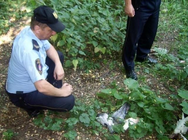 Strażnicy miejscy znaleźli na działce u zbiegu ulic Waryńskiego i Wyszyńskiego 16 martwych gołębi hodowlanych.