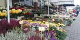 Miasto pomaga sprzedawcom kwiatów. Za darmo udostępnia miejsca do handlu