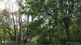 Wycinka 24 zdrowych drzew z osiedla w Poznaniu? Ma powstać parking, którego chce część mieszkańców. Natomiast druga broni drzew