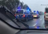 Korki w Poznaniu - na Bukowskiej drogę zablokował martwy dzik