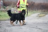 """Uwaga problem! Psy skazane na życie za kratkami w łódzkim schronisku. Rekordzista """"siedzi"""" już 10 lat"""
