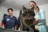 Psy i koty zarażają się koronawirusem. Alarm u weterynarzy!