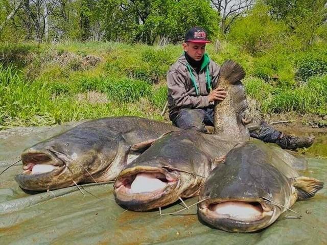 Niewiele osób wie, jak ogromne ryby zamieszkują wody Odry.