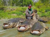 Pan Czarek od trzech lat wyciąga z Odry sumy-giganty. Takie wielkie ryby żyją w Lubuskiem! Zobaczcie zdjęcia. To nie fotomontaż!
