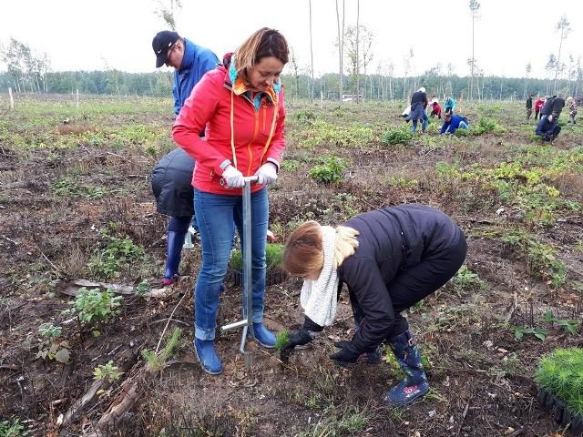 Tam do czasu nawałnicy w 2017 r. był las. W 2019 r. pracownicy Oddziału ZUS-u w Bydgoszczy posadzili tam drzewa