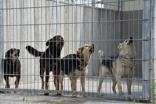 W schronisku przy ul. Przytulnej w Grudziądzu jest obecnie 140 kotów i 240 psów