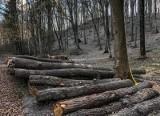Kupa w lesie? Lasy Państwowe tłumaczą, jak prawidłowo się wypróżniać. Ważny jest szacunek dla przyrody i innych