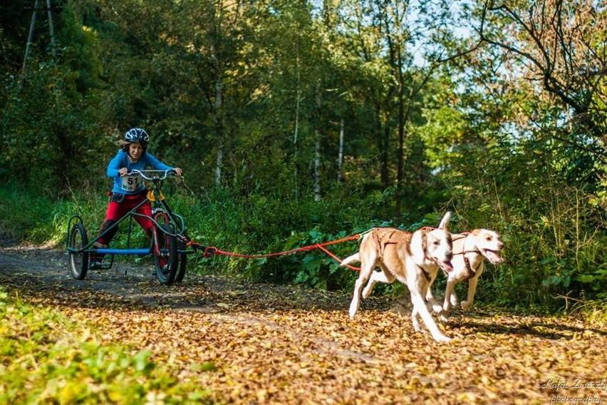 To będzie pierwszy taki wyścig psich zaprzęgów w Polsce