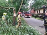 Powalone drzewa, zalane piwnice, uszkodzone auta po ulewach na Dolnym Śląsku ZDJĘCIA
