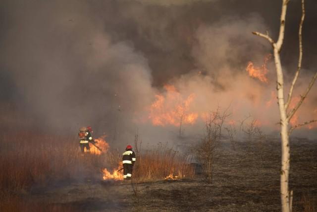 Paląca się trawa przy większym podmuchu może zmienić się w poważny pożar lasu