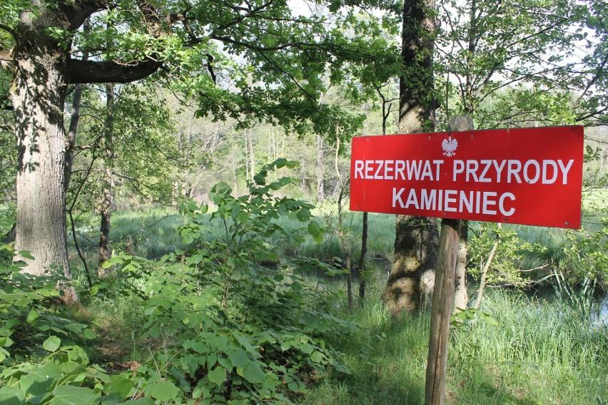 Kamieniec, Sobisz, Radomil, Chałupy, Rydzek - śródleśne osady w lasowickiej gminie.