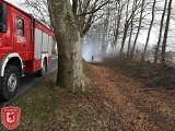 Silny wiatr łamie drzewa w Koszalinie i regionie. Kilkanaście interwencji strażaków [ZDJĘCIA]