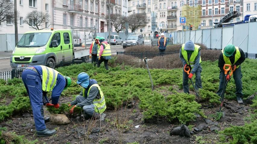Poznań: Rozpoczęło się przesadzanie drzew i krzewów na...