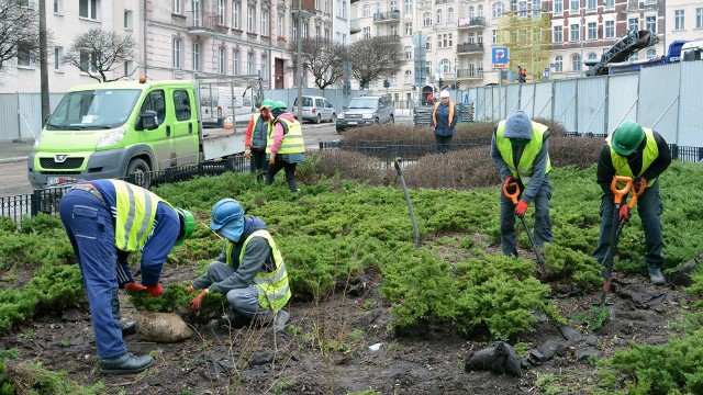 Poznań: Rozpoczęło się przesadzanie drzew i krzewów na Łazarzu. 12 drzew trafi do parku Kasprowicza, ale po przebudowie przybędzie ich 50