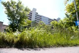 Łąki kwietne we Wrocławiu. W tych miejscach trawa będzie koszona rzadko lub wcale