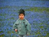 Kwitnące cebulice przyciągają do Parku Klepacza setki łodzian
