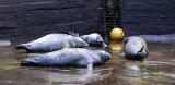 Błękitny Patrol WWF w gdańskim ZOO. Opowiedzą o fokach i morświnach. Spotkanie w Gdańskim Ogrodzie Zoologicznym w niedzielę, 19 sierpnia