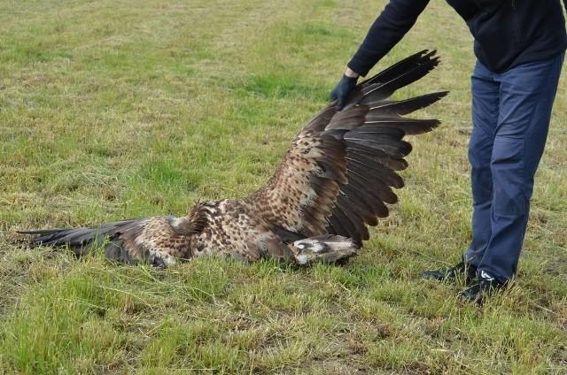 Martwe ptaki znaleziono na polu w Wielowsi. Wszystkie należały do gatunków chronionych. Czy zostały otrute?Kolejne zdjęcie -->