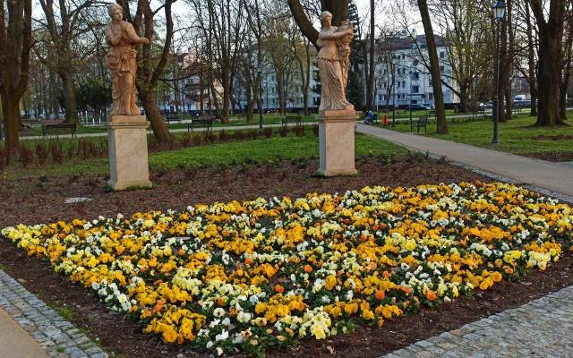 Ogród Miejski im. Solidarności w Rzeszowie staje się kolorowy. To przyjemne miejsce na wiosenny spacer, aktywność fizyczną czy zabawę z dziećmi na placu zabaw.