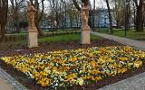 Ogród Miejski im. Solidarności w Rzeszowie staje się coraz bardziej kolorowy. To przyjemne miejsce na wiosenny spacer [ZDJĘCIA]