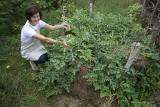 LUBUSKIE. W Anielskich Ogrodach w Budachowie rosną też arbuzy! Jak to możliwe? (ZDJĘCIA)