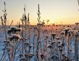 Piękny mroźny wschód słońca w Puszczy Knyszyńskiej