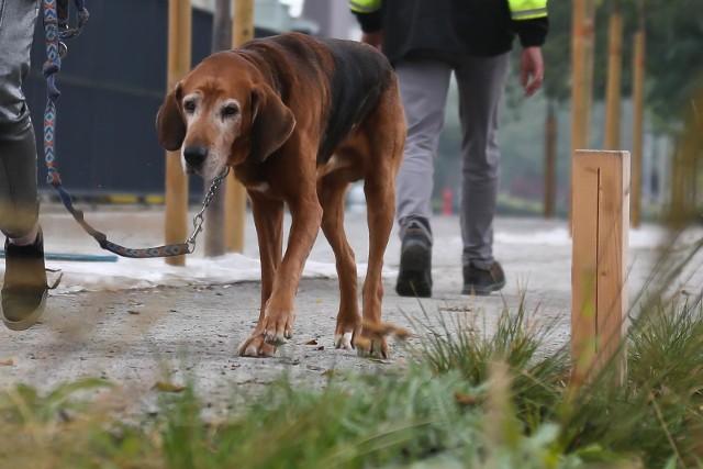 Jeden pisuar dla psa kosztował 408 złotych. Miasto wydało na 26 takich drewnianych słupków ponad 10 tysięcy złotych.