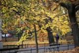 Ostatnie chwile jesieni w Lasku Wolskim i na krakowskich Plantach. Korzystają spacerowicze i rowerzyści [ZDJĘCIA]