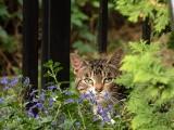 Rośliny trujące dla kotów. Masz w domu kota? Pamiętaj, że niektóre popularne i piękne rośliny mogą mu zaszkodzić