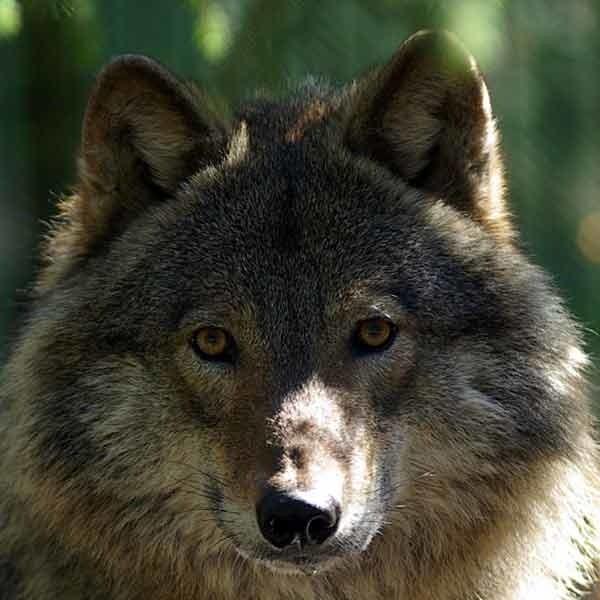Te zwierzęta to są nasze narodowe skarby. Musimy tylko umieć je wypromować.