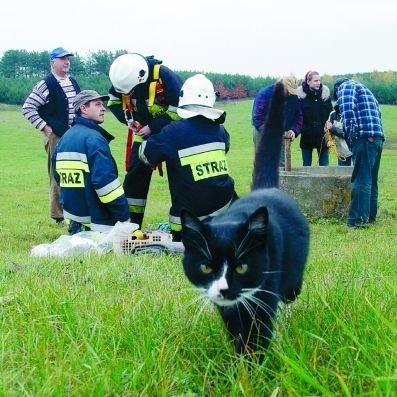 Akcji ratowania kota ze studni przyglądały się inne koty - może nawet rodzina sprawcy zamieszania.