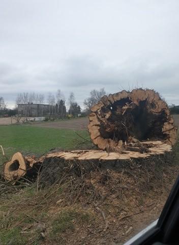 Wycięte drzewa zagospodaruje wykonawca inwestycji