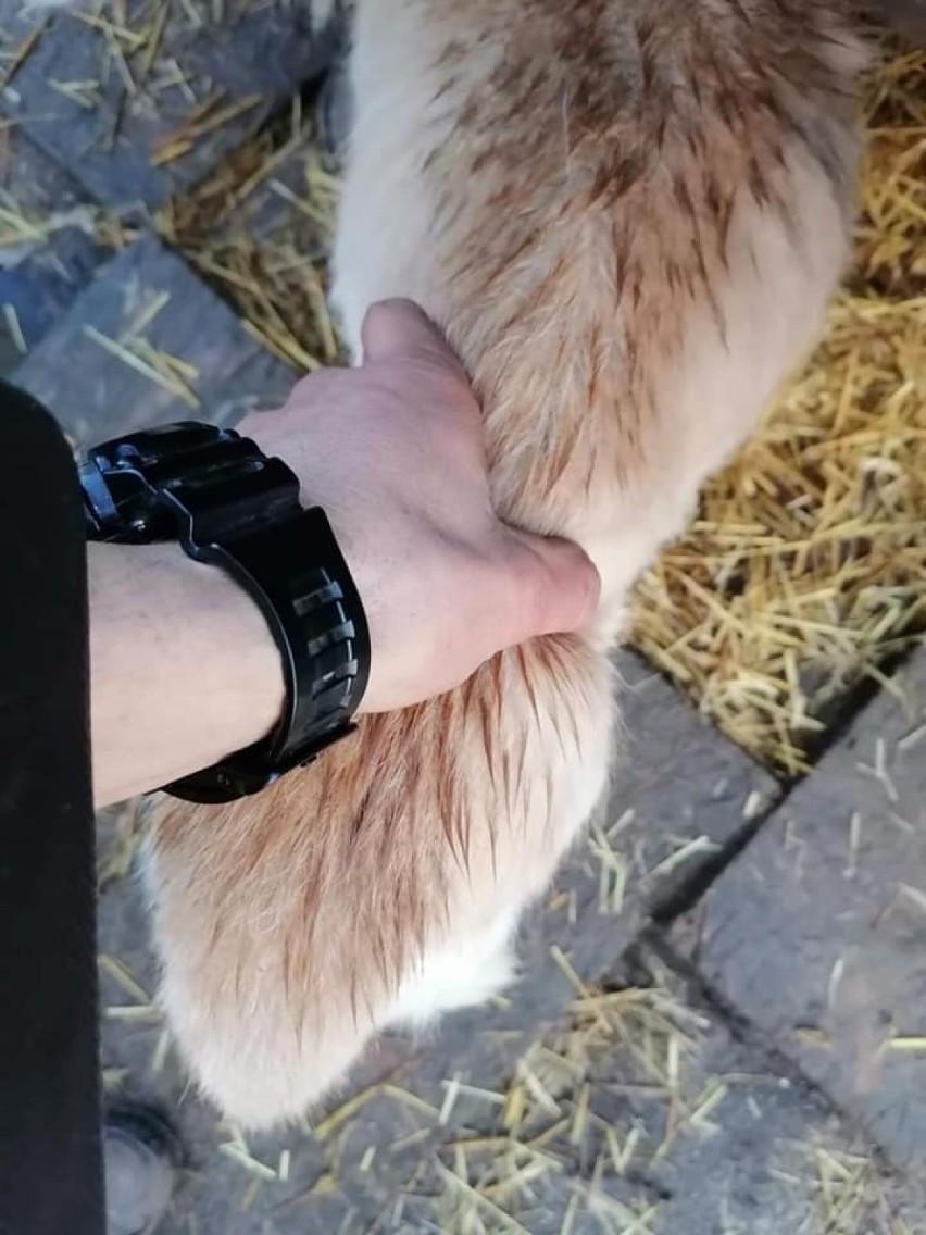 Dzielnicowa z Bytowa uratowała psa. Był wychudzony i zaniedbany. Właścicielka odpowie za znęcanie się nad zwierzętami
