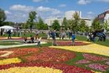 Bydgoska firma Florita słynie z dywanów kwiatowych. W biznes uderzył koronawirus [zdjęcia]