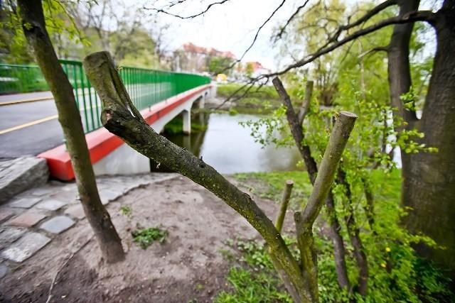 Ktoś niszczy drzewa przy Żabiej Ścieżce i ul. Okólnej. POlicja jest bezradna