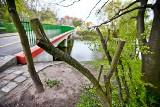 Wandal z piłą grasuje przy Żabiej Ścieżce i niszczy drzewa