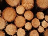 Wycięli nielegalnie ponad 30m sześciennych drzew o wartości prawie 8 tys.