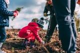 """Akcja """"Do nasadzenia"""" w Nadleśnictwie Lipusz po raz kolejny zakończona  sukcesem. Na terenach poklęskowych posadzono 90 tys. drzew"""