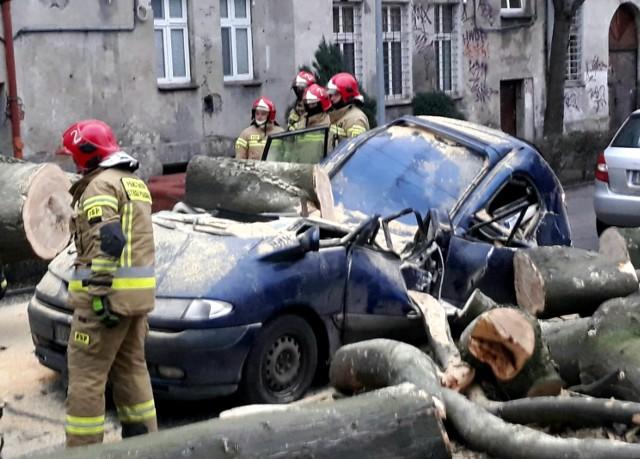 20-metrowe drzewo przewróciło się w podwórku przy ul. Grunwaldzkiej we Wrocławiu 4.02.2021