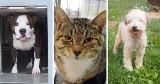 Te zwierzęta czekają na adopcję we Wrocławiu. Nie kupuj, adoptuj!
