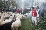 Mieszanie owiec w Istebnej na Stecówce w padającym śniegu ZOBACZCIE ZDJĘCIA