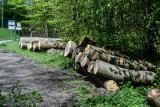 To skandaliczna ustawa, która toruje drogę masowej wycince drzew! - mówi przyrodnik. Lasy Państwowe będą mogły sprzedawać drewno na opał?