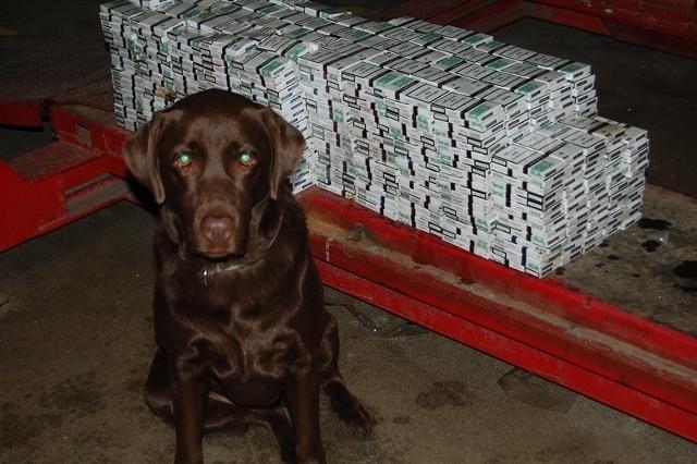 Peper wywęszyła na przejściu w Medyce przemyt tysiąca paczek papierosów.