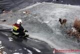 Trzemeszno: Strażacy uratowali dwa psy. Wyciągnęli je z zamarzniętego zbiornika na składowisku odpadów