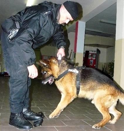 Wszystkie szzkolne pomieszczenia sprawdził wczesnym wieczorem Odak - jeden z najlepszych w Polsce psów do poszukiwań materiałów wybuchowych, któremu podczas akcji towarzyszył m.in. mł. asp. Marcin Dominiak.