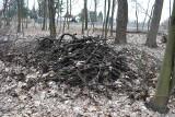 Sosnowiec. W Lesie Zagórskim wycinają drzewa. Mieszkańcy są zaniepokojeni. Nadleśnictwo: celem jest wprowadzenie nowego pokolenia lasu