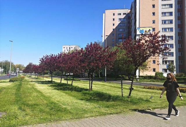 1450 osób podpisało się pod internetową petycją sprzeciwiającą się rozbudowie ulic Meissnera i Młyńskiej oraz wycince drzew w związku z planowaną budową linii tramwajowej do Mistrzejowic