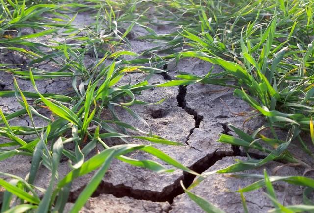 Nabór w ramach poddziałania Inwestycje odtwarzające potencjał produkcji rolnej rozpoczął się 11 marca i będzie trwał do końca 2021 roku.