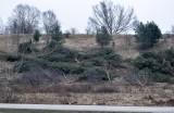 Kontrowersyjna wycinka drzew przy ul. Słowackiego w Gdańsku [WIDEO,ZDJĘCIA]